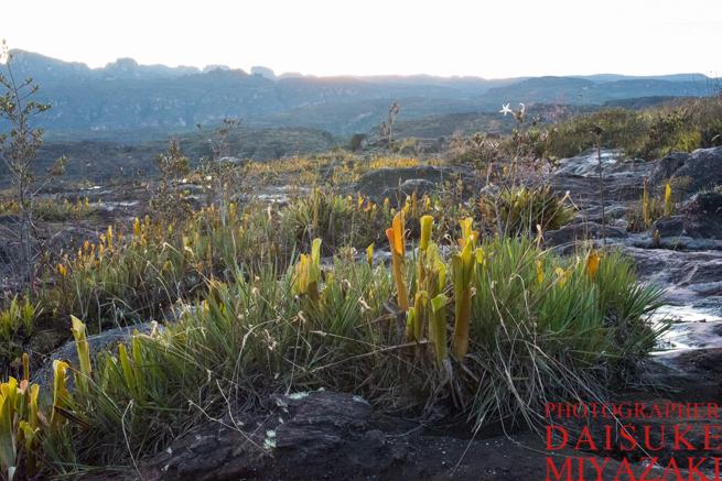早朝のアウヤンテプイの頂上