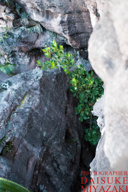 アウヤンテプイの頂上にある亀裂