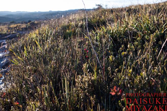 アウヤンテプイの草原地帯