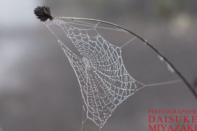 アウヤンテプイでクモの巣についた水滴