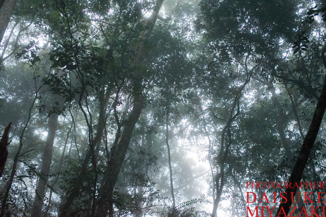 霧が立ち込めるアウヤンテプイの森