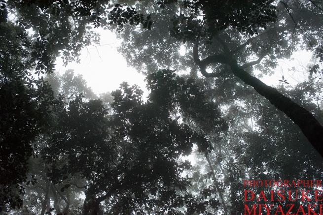 アウヤンテプイの霧深い森