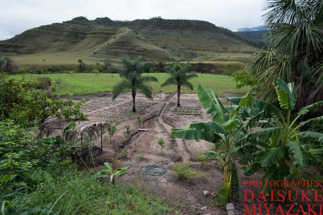 カバック村の野菜畑