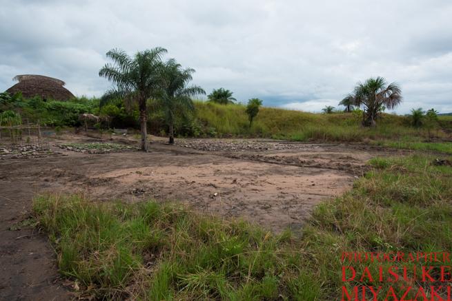 新しく開墾した畑