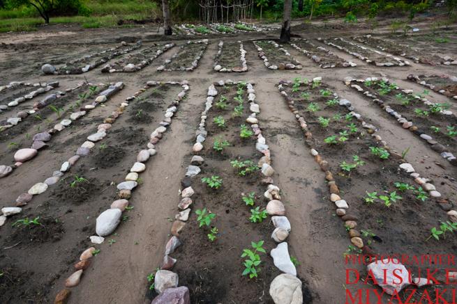 石を使った家庭菜園