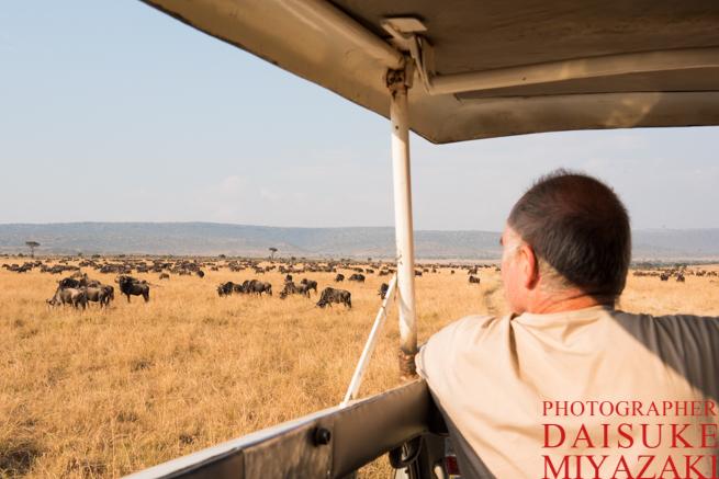 マサイマラ国立公園でヌーを眺める観光客