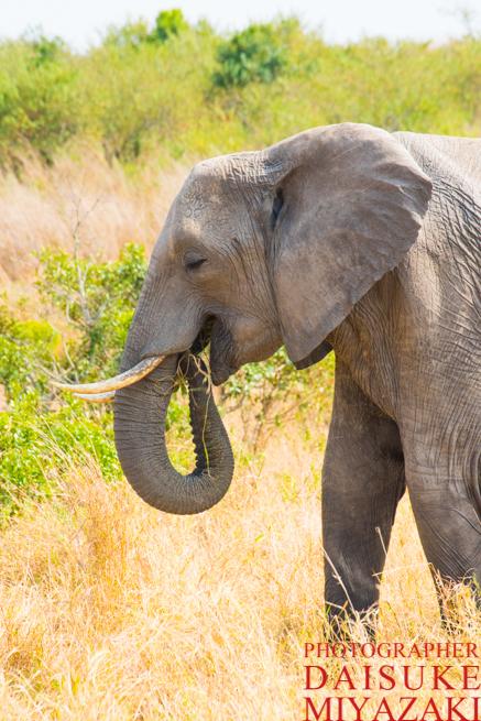 象のお母さん