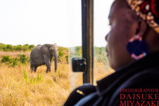 象とそれを見る観光客