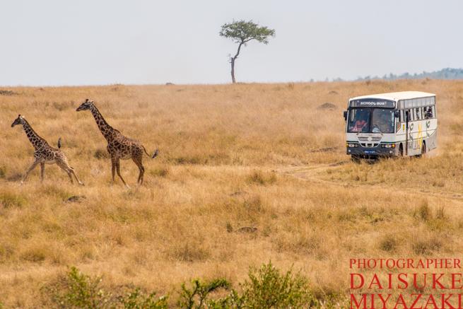 キリンと観光バス