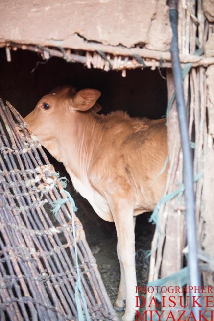 マサイ族の家の仔牛専用の部屋