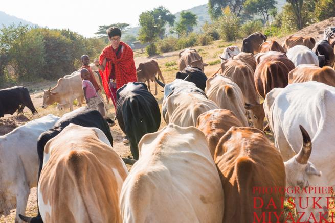 マサイ族の牛と私