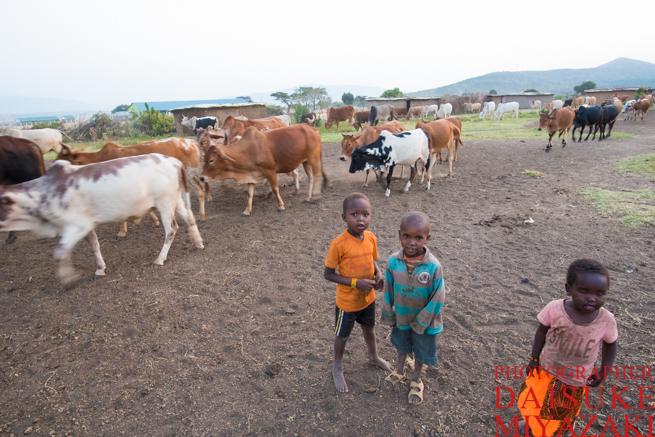 マサイ村の家畜と子供