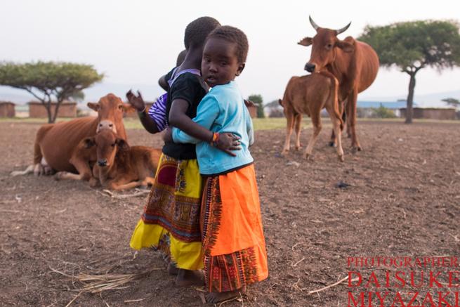 マサイ族の村の少女と牛の親子