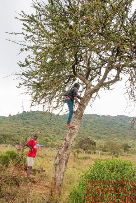 木に登るマサイ族の子供
