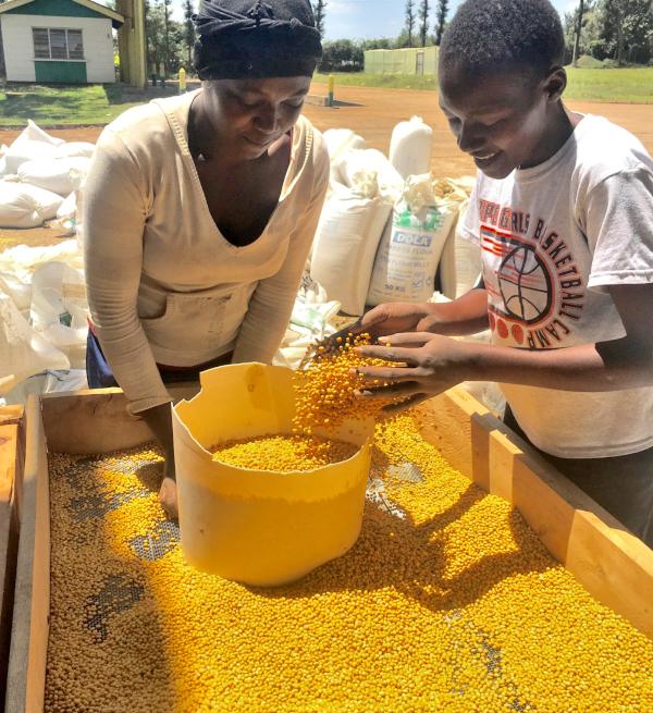 ケニアで大豆ビジネスを行う薬師川さん