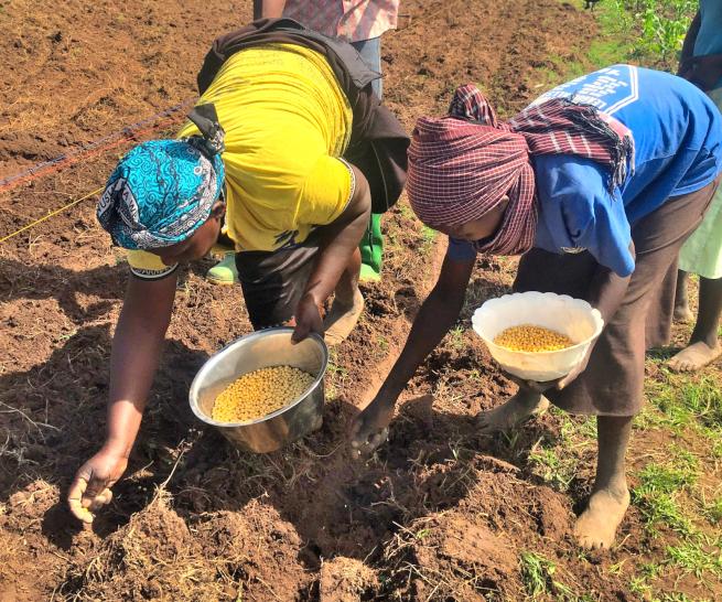 ケニアで大豆農家を支援するAlphajiri Limited