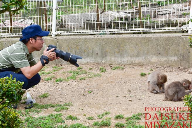 子ザルを撮影するカメラマン