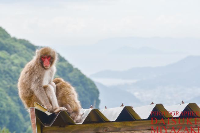 天井に乗る猿