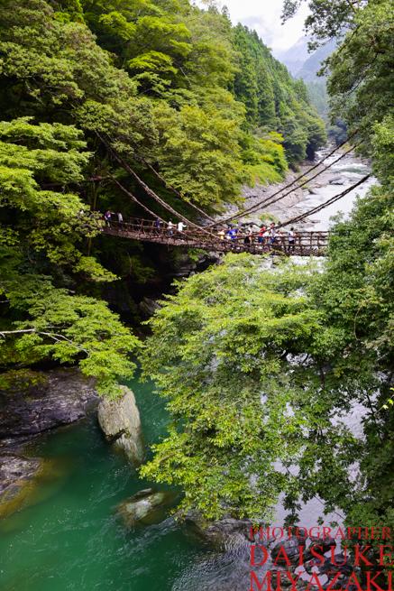 新緑のかずら橋