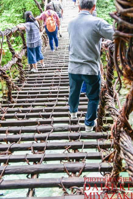 かずら橋をゆっくりわたる観光客