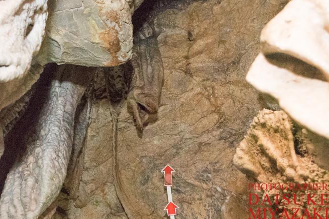 龍河洞のサケの石