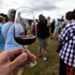 ワイン初心者向け!ワイン用のブドウ25品種の特徴まとめ