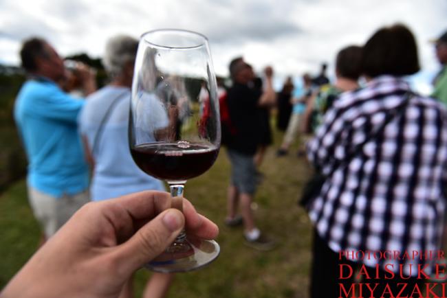 ワイン初心者におすすめの赤・白ワインのブドウ25品種!特徴、産地、相性が良いツマミ