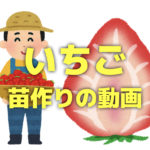 いちごの苗作りを初心者向けに解説する動画集