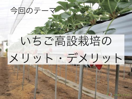 いちご高設栽培・高設ベンチのメリットとデメリット10個を土耕栽培と比較して解説