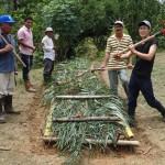 2種類のからし菜料理でもダメ!野菜を食べる食文化がない中南米に野菜栽培を普及する難しさ
