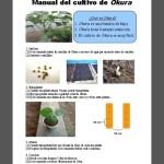 中米パナマではオクラをコーヒーとジュースにする!青年海外協力隊の農業指導で生きる発見