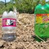 ペットボトル自動水やり器の作り方!お出かけ、留守中のガーデニングや鉢植えの水やりに便利