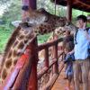 【ケニア観光】ナイロビのジラフセンターでキリンとディープキスしてきたよ