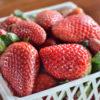 いちごの旬の季節はいつ?苺が一番美味しい時期は冬だけど春夏秋でも出荷する